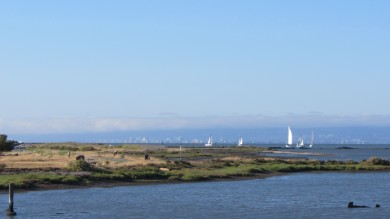 Sail boats go out on a sunny day, San Francisco in the background