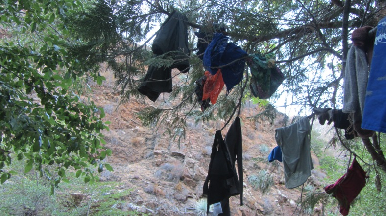 Laundry tree #1
